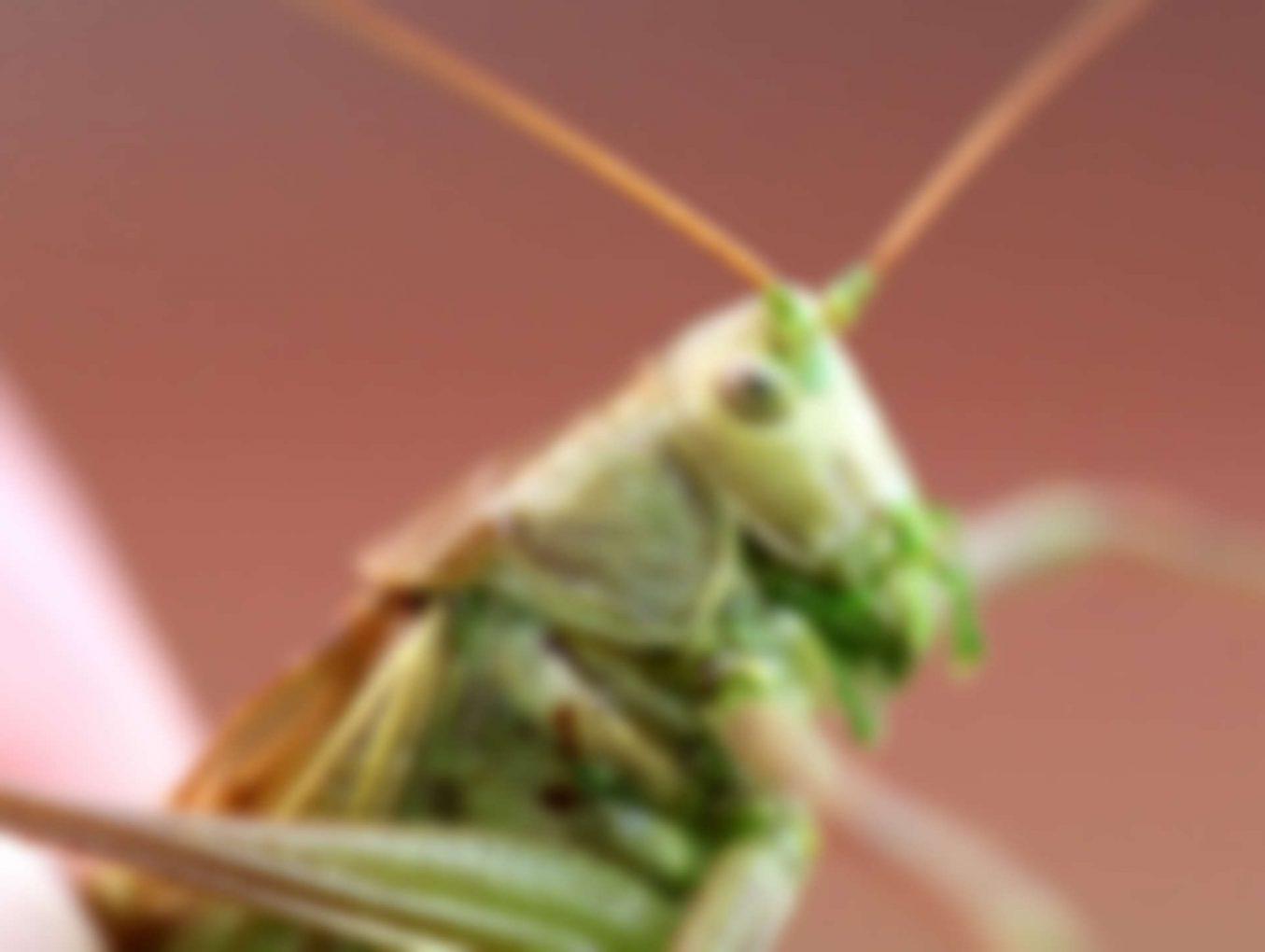 Flies: Getting Rid of Them