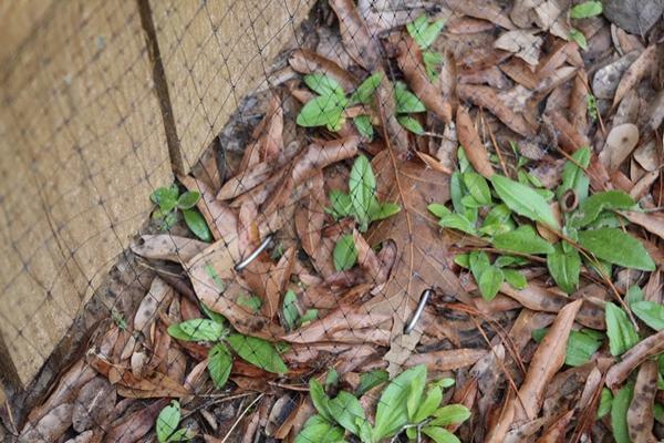 Snake-Prevention-Fence-Miami-FL
